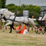 Carriage Driving – what it's all about