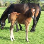 The question of breeding horses…