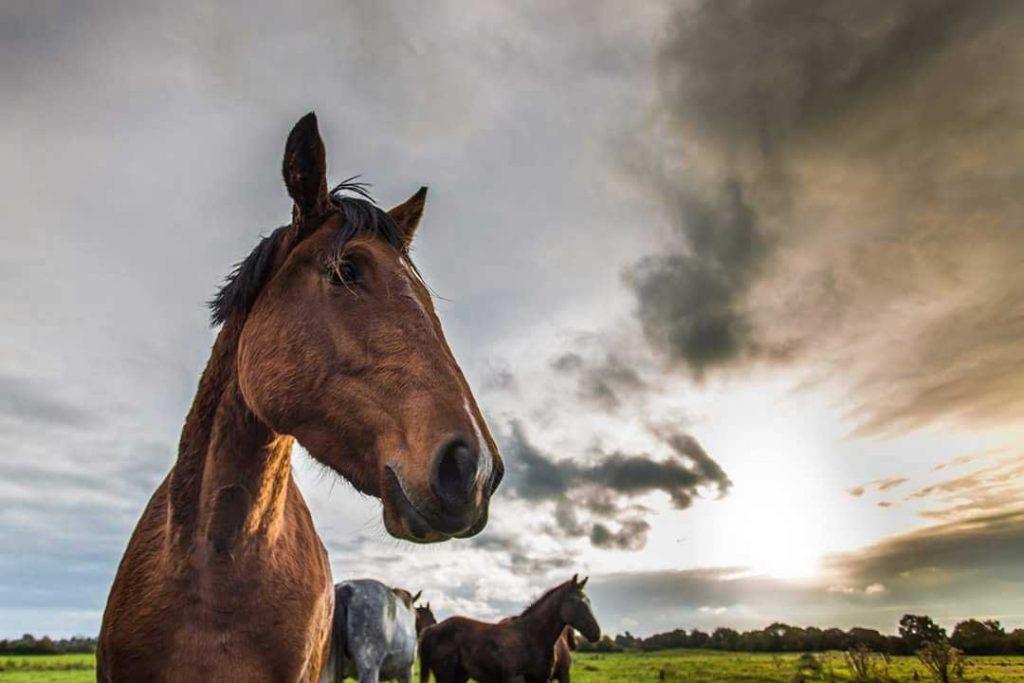 Hollywell-Horses