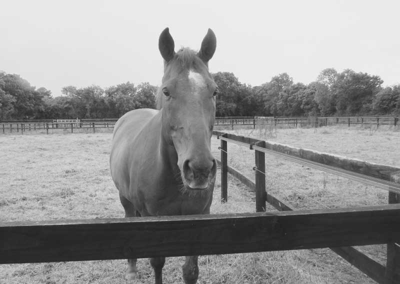 disease-control-in-horses