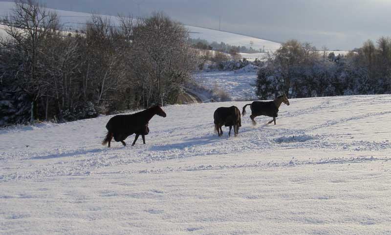horses-in-winter-in-ireland