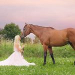 horse-wedding-company