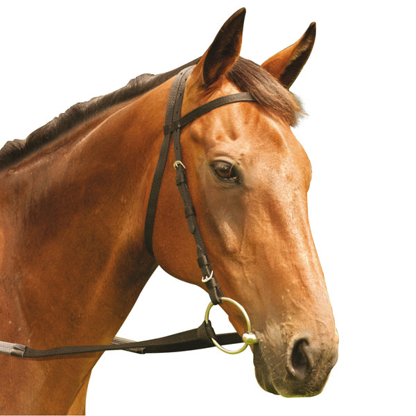Equisential Nylon Race Bridle Horseplay