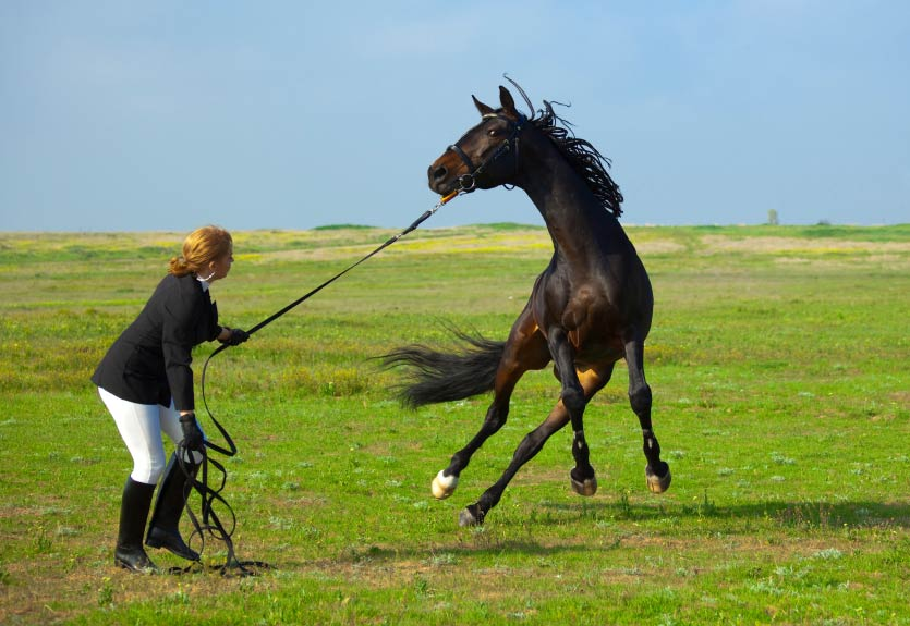 Excitable-horse