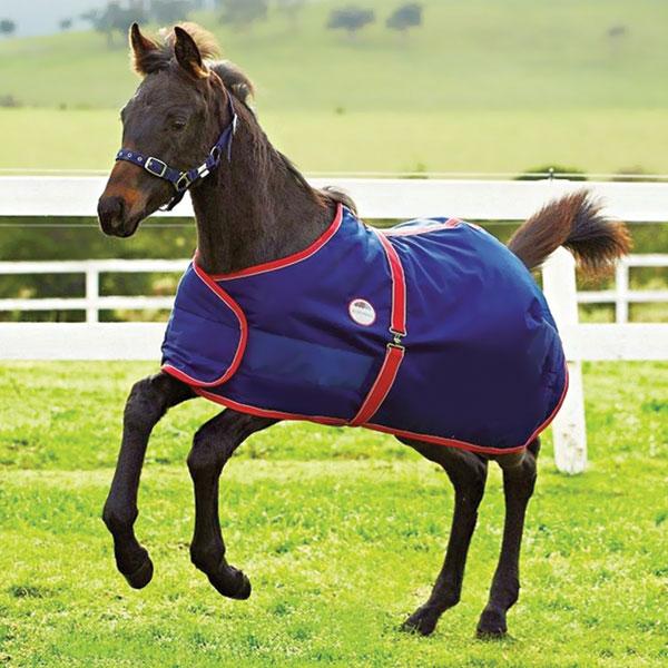 Foal-Outdoor-Rug