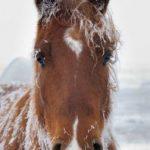 q7l-new-year-horse