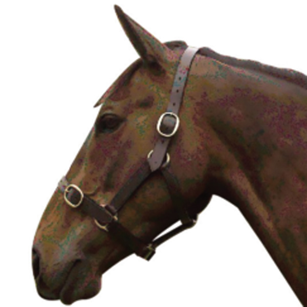 Economy Leather Headcollar