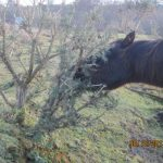 ispca-horse-welfare