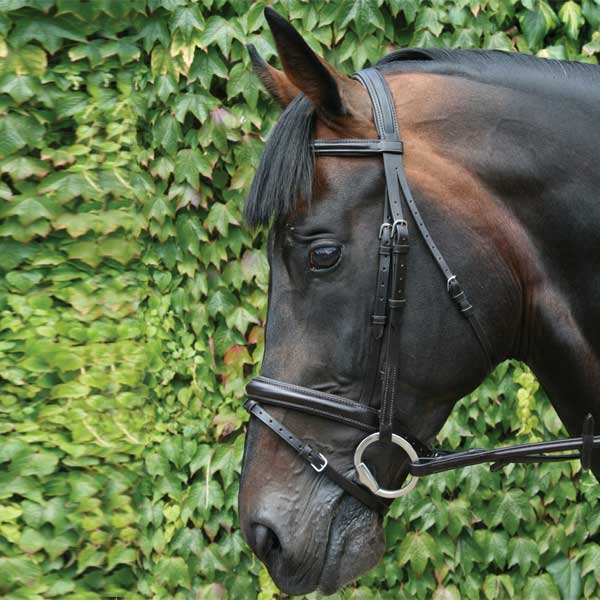 Mackey-Legends-Flash-Bridle