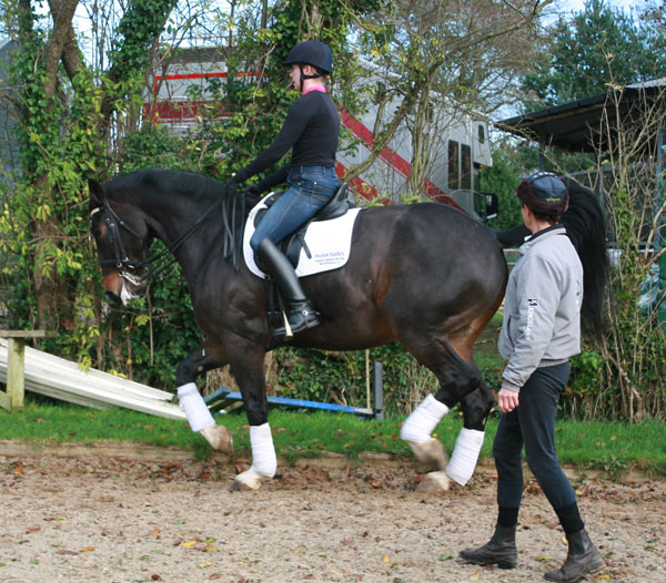 Training Piaffe for Grand Prix Dressage
