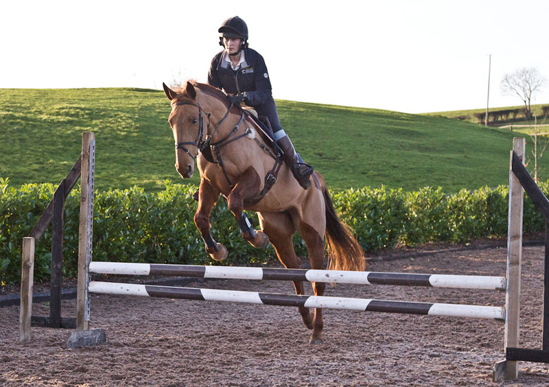 Training-a-horse-to-jump-arrowheads-jumping-the-centre-of-a-vertical