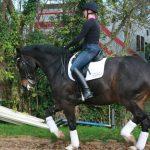twitter-training-the-grand-prix-horse