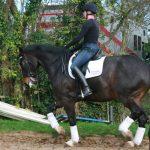 training-the-grand-prix-horse
