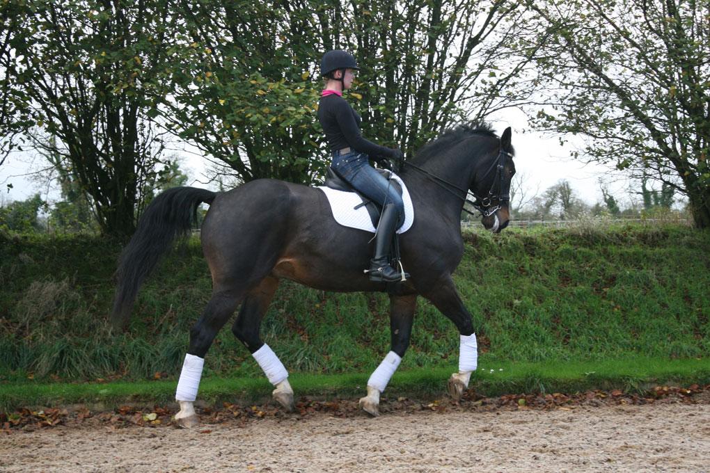 training the grand prix horse