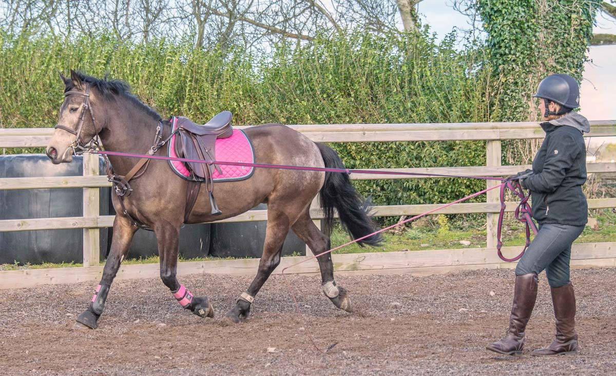 potty about lunging  insights into how to lunge your horse