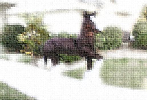 Panto-Horse