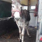 ispca-donkey