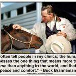 horse-rider-confidence