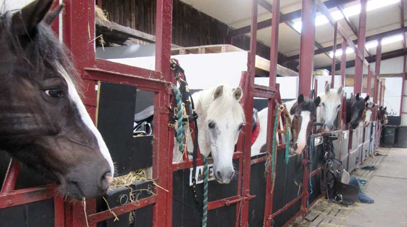 horse-housing-and-facilities