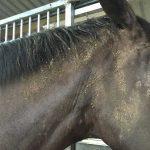 muddy-horse2