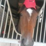 balcultry-pony-camp1