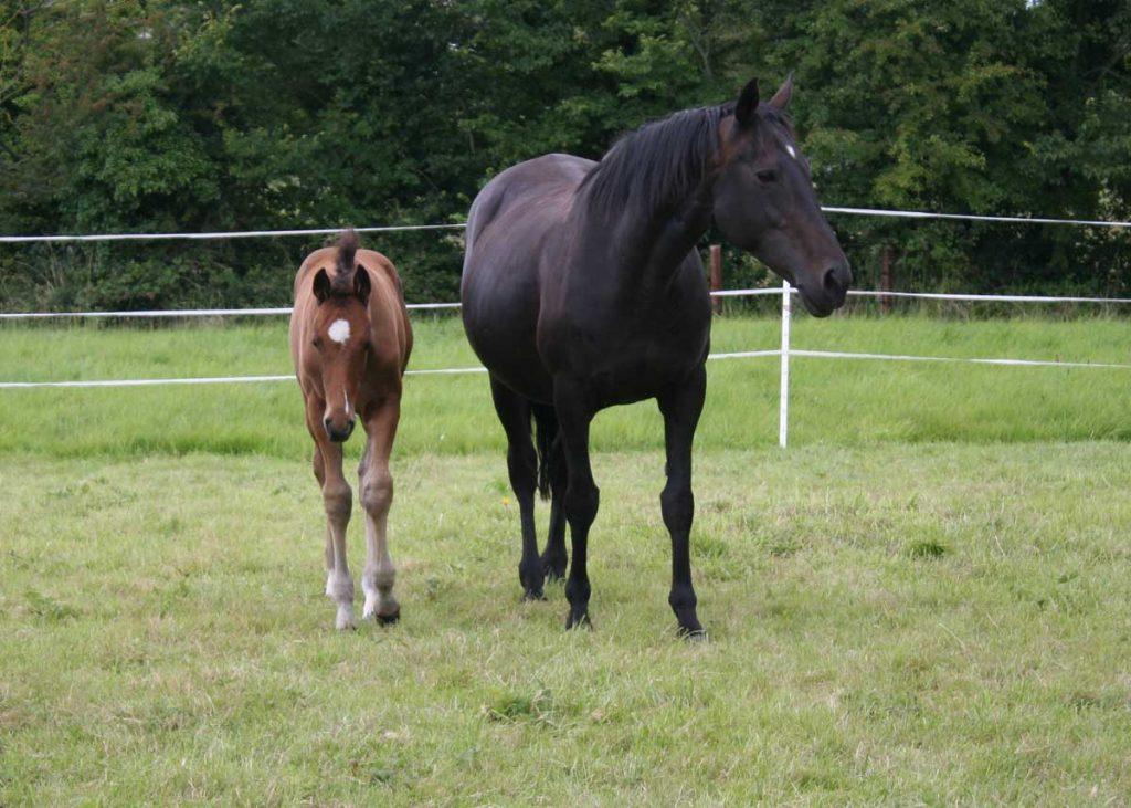 Mare-&-Foal