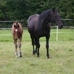 The next steps in breeding your mare