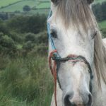 Cork man pleads guilty causing unnecessary suffering to a mare by a rope embedded in her nose