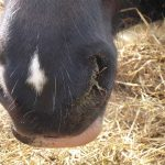 equine-antimicrobial2
