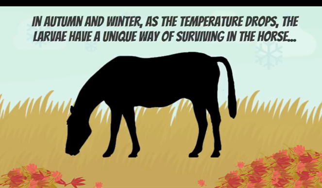 horse worming graphic