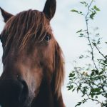 How Horses Help with Spiritual Health