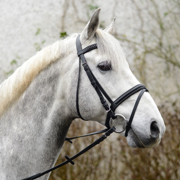 Mackey-Equisential-bling-bridle