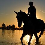 Horsing Around: Hobby Riding on a Budget