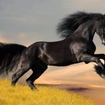 And now, a word from Black Beauty